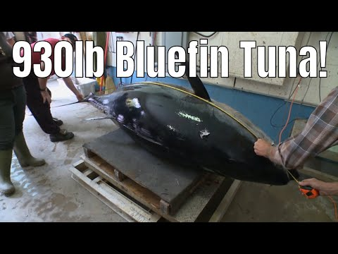 Two Guys Tag-Team A 930lb Bluefin Tuna | Fish'n Canada