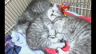 Funny Kittens Sleeping in Weird Positions | Kittens Sleeping | Meo Cover Home !!!!