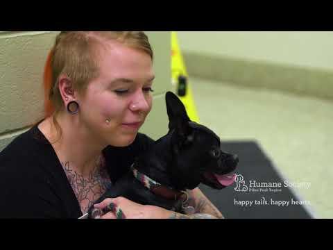 On The Job: Animal Care