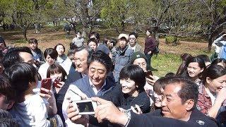首相、桜を見ながら散歩 私邸周辺を約1時間 thumbnail