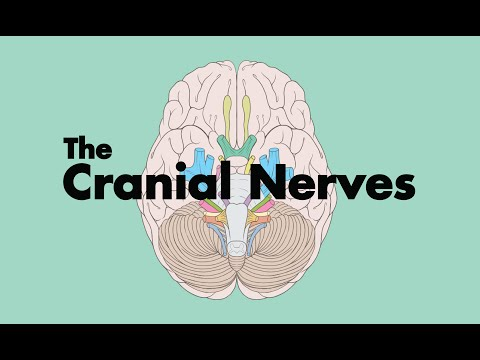 How to Remember the Cranial Nerves (Mnemonic) - MEDZCOOL