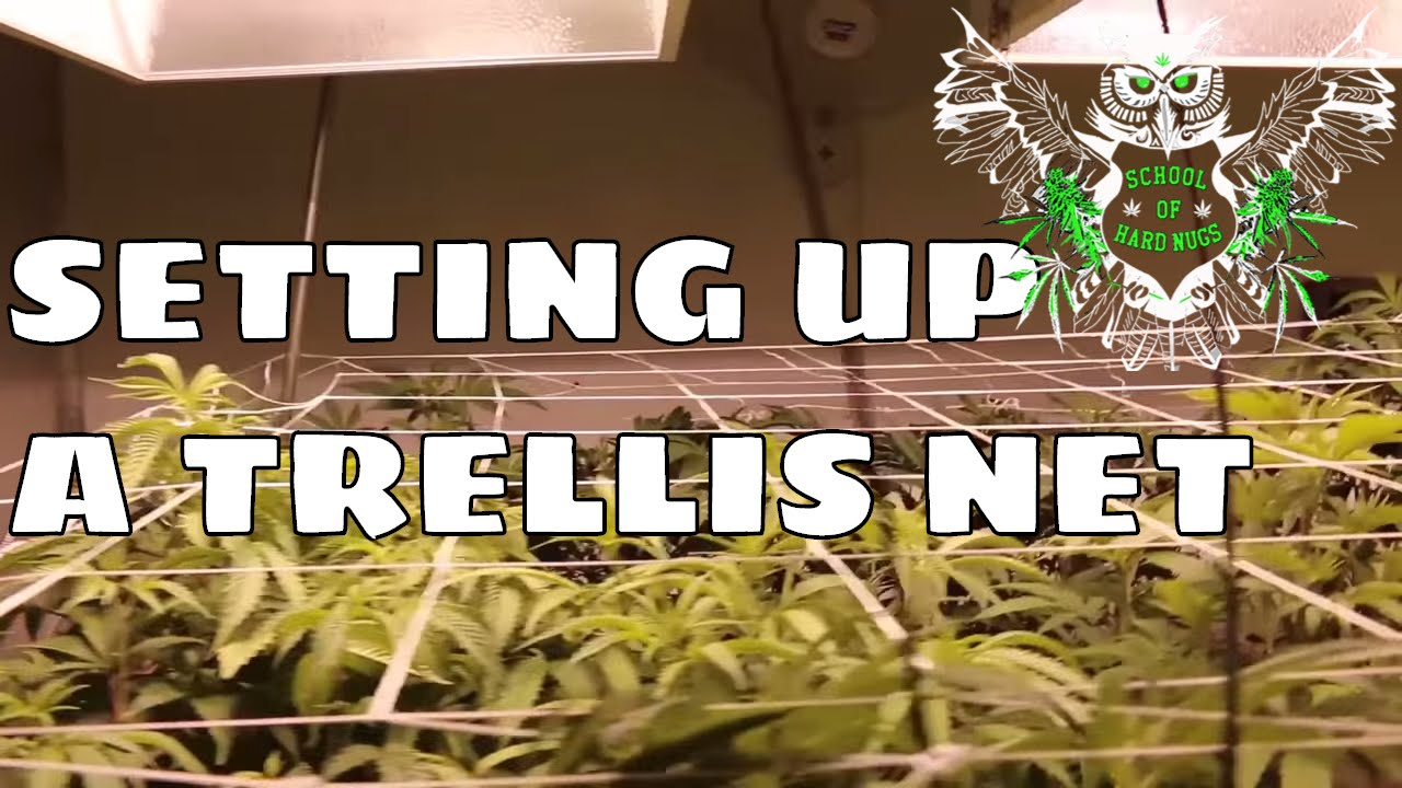Setting Up A Trellis Net for an Increased Yield | Netting your Cannabis | Screen of Green : grow tent netting - memphite.com