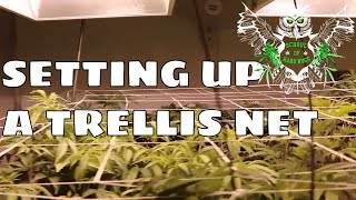 Setting Up A Trellis Net for an Increased Yield | Netting your Cannabis | Screen of Green