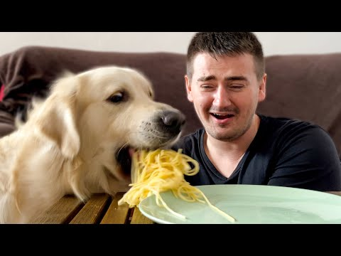 Spaghetti Eating Competition: My Dog vs Me [Round 2]
