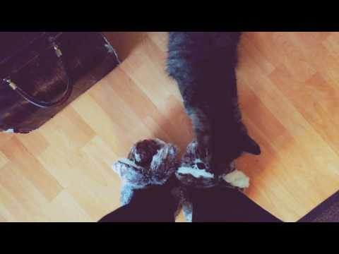 Norwegian Forest Cat fell in love with Bunny slippers
