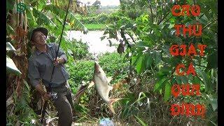 Đi câu gặp cao thủ giật cá liên tục   Câu cá miền tây   Sắc Màu VN