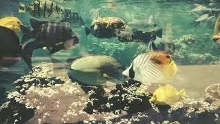 aquarium in Hawaii