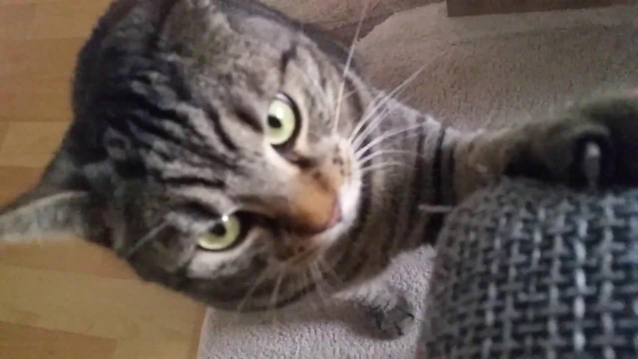 Katze Dreht Durch