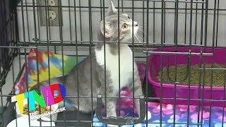 Box of kittens left on shelter's doorsteps