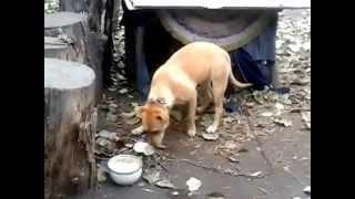 Собака прячет еду
