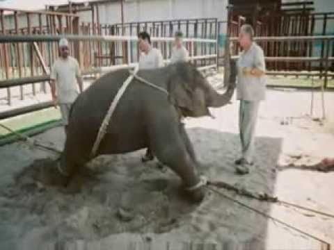Have Trunk Will Travel & Ringling Bros.Circus FRAUD - CRUELTY- HUMAN DEADLY TUBERCULOSIS