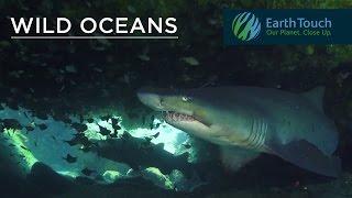 Wild Oceans series