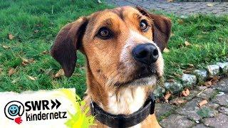 Tiertrainerin Farina verrät die Tricks von Filmhund Carlo | Tiere bis unters Dach | SWR Kindernetz