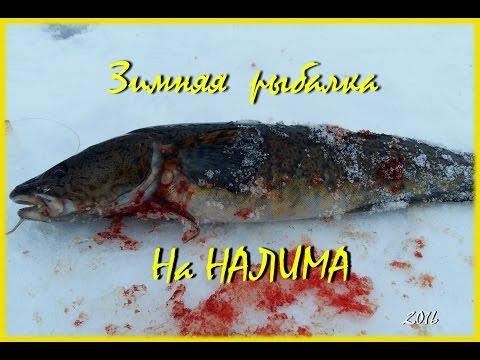 зимняя рыбалка на налима карелия