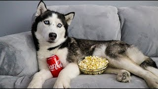 My Huskies Had A Movie Night Without Me!