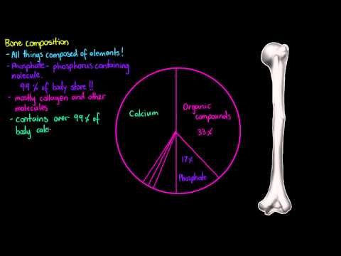 Bone Composition