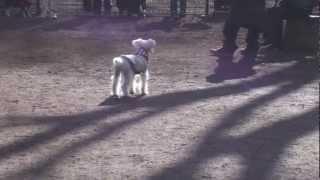 代々木公園ドッグランでのシュナの様子。遊ぶことより飼い主ばかりが気...