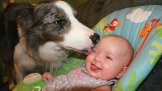 Dogs Meeting Babies For The First Time Compilation 2017 [BEST OF]