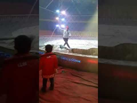 Lion and tiger attacked a horse in a Chinese  circus