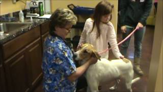 Adoptable Dog - Wynne Animal Rescue Shelter.