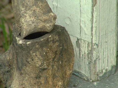 Ancient Human Skeleton Found In Backyard Youtube