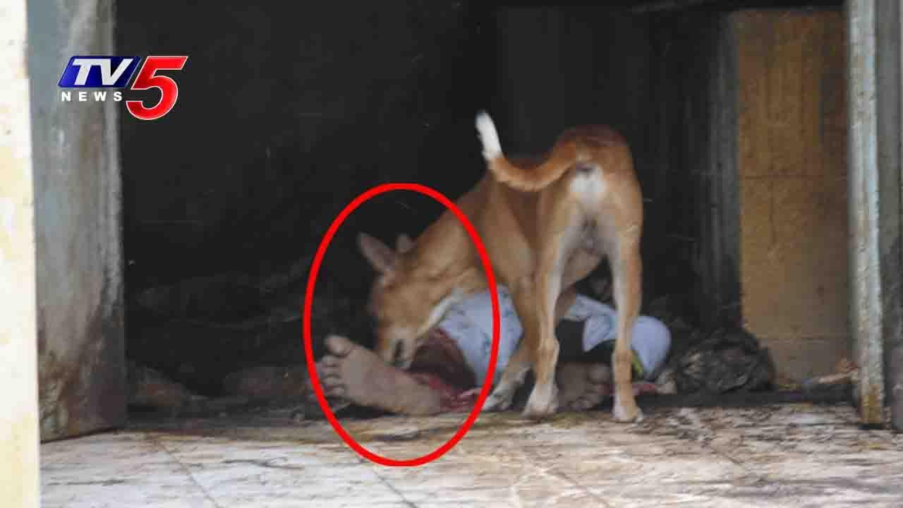 dog eats dead body in ruia hospital