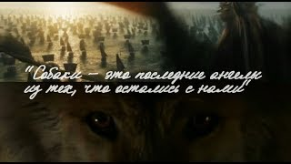 """В ожидании 8 сезона: """"Собаки - это последние ангелы"""" - фанатский клип по Игре Престолов"""