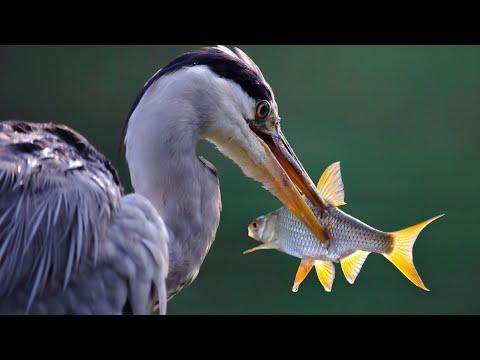 DARUM IST FISCH SO EXTREM UNGESUND 🔥 AUSWIRKUNGEN AUF DIE GESUNDHEIT