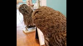 Excuse Me, Who Are You? - Funny Animals Video