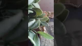 이나비 ㅡㅡ쇼****