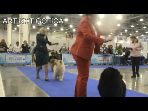 """Art Kot Gotica - """"Eurasia 2017"""""""