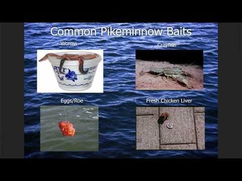 How-To-Catch-Pikeminnow Instructional Seminar