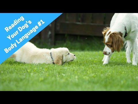 Learn How To Read A Dog's Body Language And Understand Dog Behavior #1