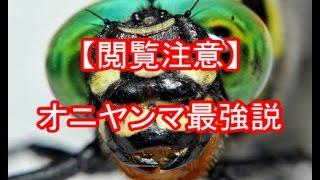 【閲覧注意】昆虫界オニヤンマ最強説