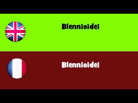 FROM ENGLISH TO FRENCH = Blennioidei