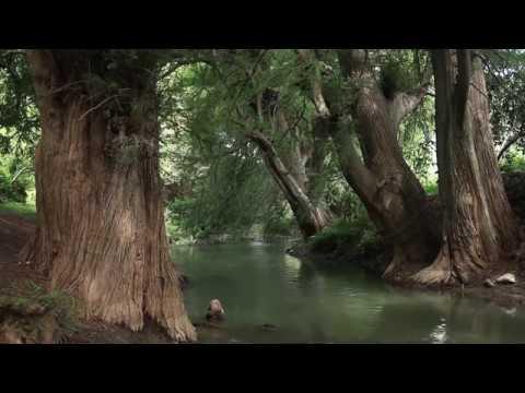 La selva en el agua