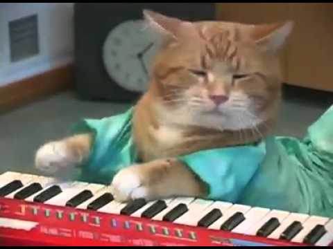 Dj Cat Show