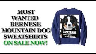Most Wanted Bernese Mountain Dog Funny Dog Sweatshirts - Men's, Women's, Kid's - Black, Grey, Navy
