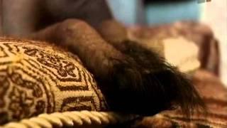 Зверская жизнь. Линька у собак(, 2011-08-18T02:00:47.000Z)