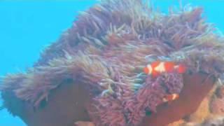 Voyage sous les mers 3D (Oceans 3D : Into the Deep)