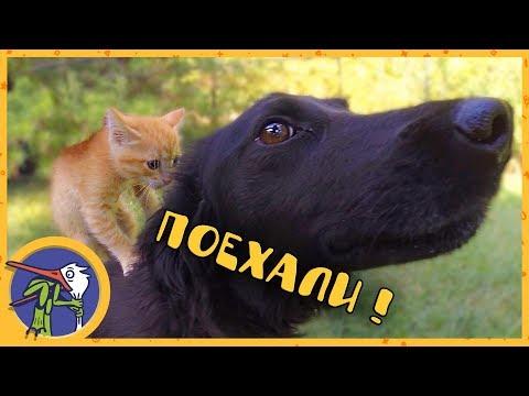 Котенок Печенька и щенок Гаффи первый раз гуляют на улице и знакомятся с собакой Ночкой