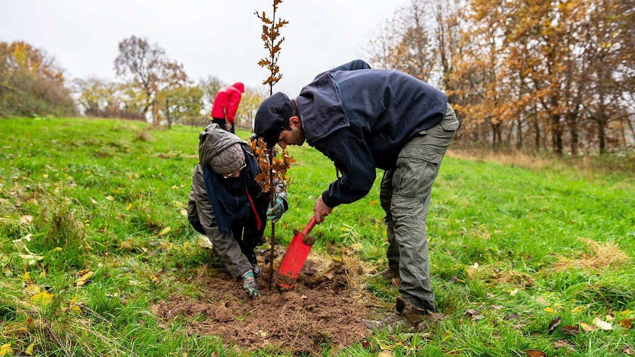 """Aktion """"Waldmeister"""": Haus bauen und Umwelt schützen"""