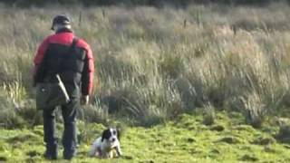 John Moore Gun Dog Trainer