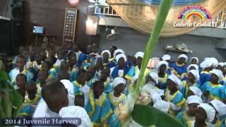 celestial church of christ comforter cathedral akoka parish 1 2014 juvenile harvest service