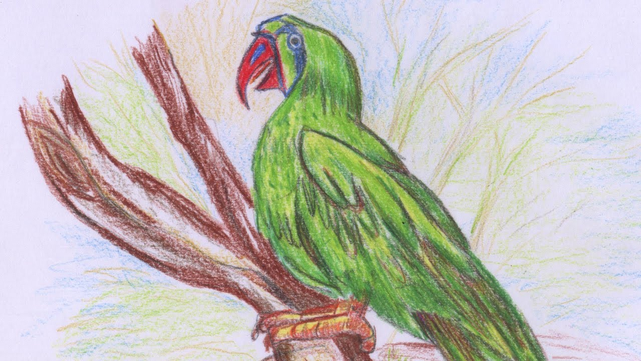 How To Sketch A Beautiful Parrot Color Pencils Easy Method