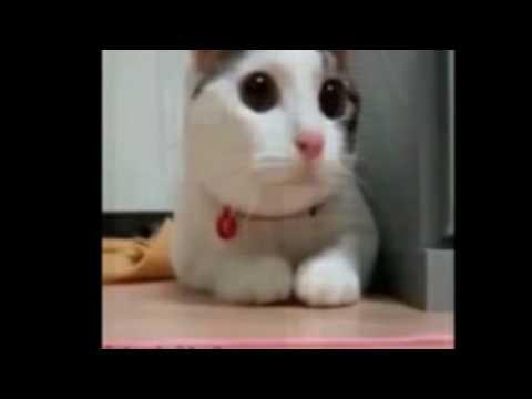 Top 10 des meilleurs chat#1