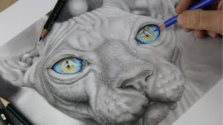 Graphite Drawing Tutorial Timelapse Sphynx  Cat