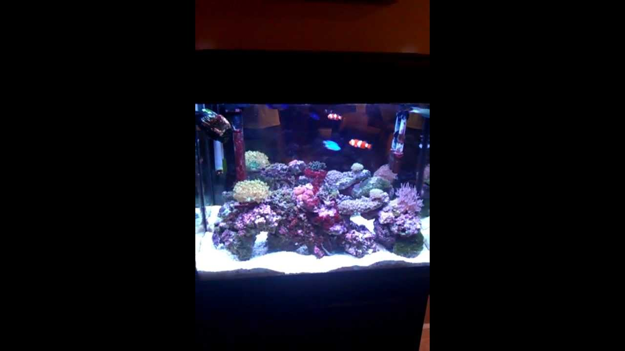 Reef tank in marineland eclipse system 3 youtube for Eclipse fish tank
