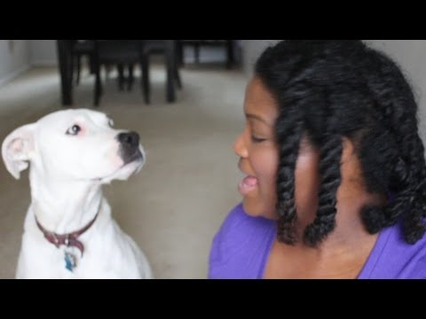 MEET SHAY SHAY | MY PIT BULL BOXER MIX