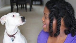 Meet Shay Shay | My Pit Bull Boxer Mix